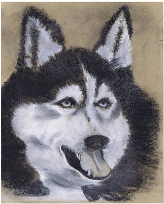 Drawing - Husky by Marilyn Barton