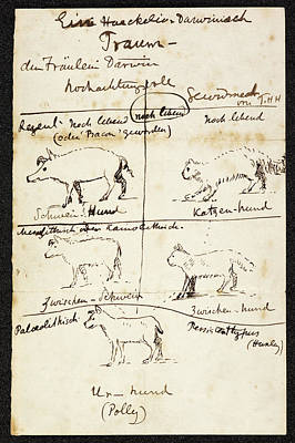 Ancestry Photograph - Huxley On Charles Darwin's Dog by British Library