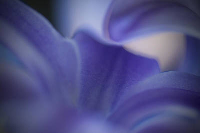 Impressionist Photograph - Hyacinth by Bill Wakeley