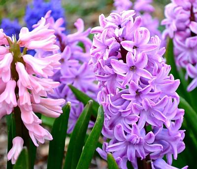 Photograph - Hyacinth by Deena Stoddard