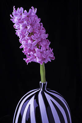 Hyacinths Wall Art - Photograph - Hyacinth In Striped Vase by Garry Gay