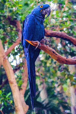 Hyacinth Macaw Art Painting - Hyacinth Macaw by John Haldane