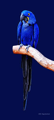 Photograph - Hyacinth Macaw Seven by DiDi Higginbotham