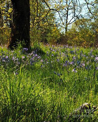 Photograph - Hyacinth Meadows II by Chuck Flewelling