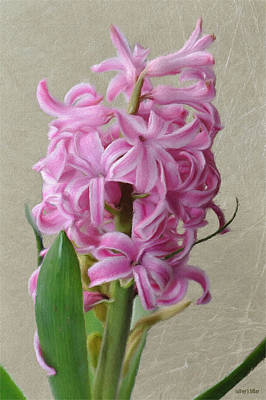 Pink Flower Digital Art - Hyacinth Pink by Jeff Kolker