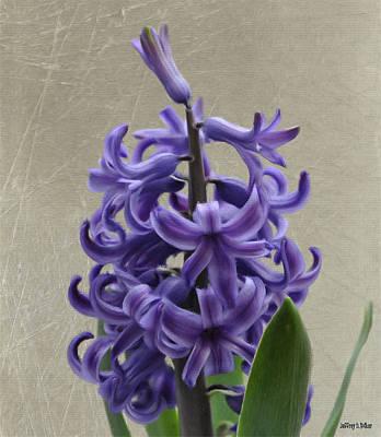 Hyacinth Purple Art Print by Jeffrey Kolker