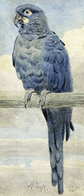 Macaws Painting - Hyacinthine Macaw by Henry Stacey Marks