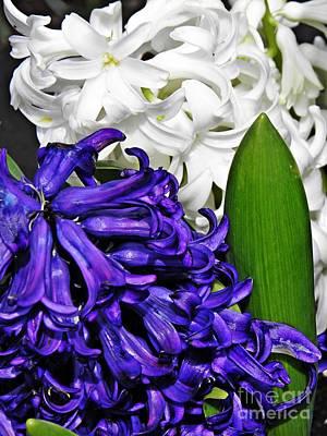Photograph - Hyacinths by Sarah Loft