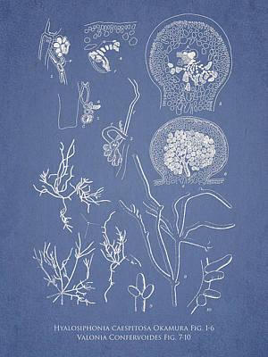 Aquarium Digital Art - Hyalosiphonia Caespitosa Okamura Valonia Confervoides by Aged Pixel