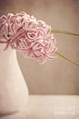 Hyacinths Wall Art - Photograph - Hyazinth In A Vase by Priska Wettstein