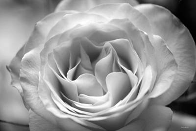 Photograph - Hybrid Tea Rose 3 In B W by Connie Fox