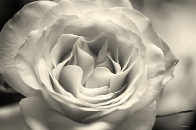 Photograph - Hybrid Tea Rose In Soft Taupe by Connie Fox