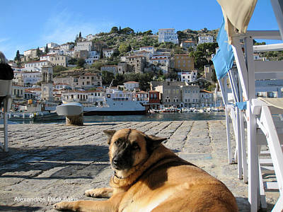Hydra And Dog Photograph - Hydra And Dog by Alexandros Daskalakis