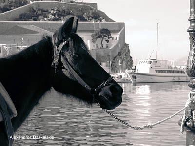 Hydra Island Photograph - Hydra Horse by Alexandros Daskalakis