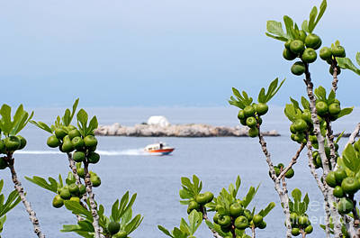 Photograph - Hydra Island During Springtime by George Atsametakis