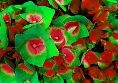 Photograph - Hydrangea 2 by Laurie Tsemak