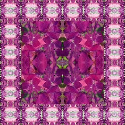 Photograph - Hydrangea Abstract by Barbara Moignard
