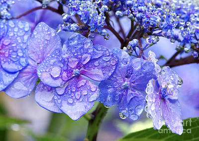 Photograph - Hydrangea After The Rain 2 by Sharon Talson