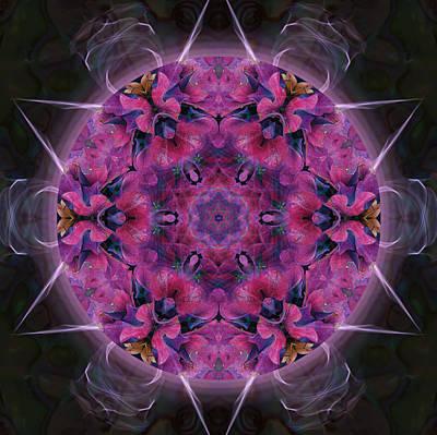 Photograph - Hydrangea by Alicia Kent