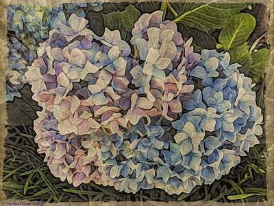 Photograph - Hydrangea Blossoms by Victoria Porter