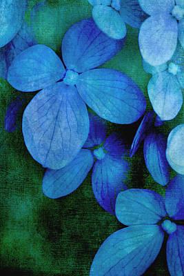 Hydrangea Blues Art Print by Christine Annas