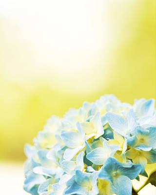 Bold Expressive Floral Photograph - Hydrangea by Carolyn Cochrane
