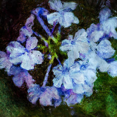 Photograph - Hydrangea by Celso Bressan