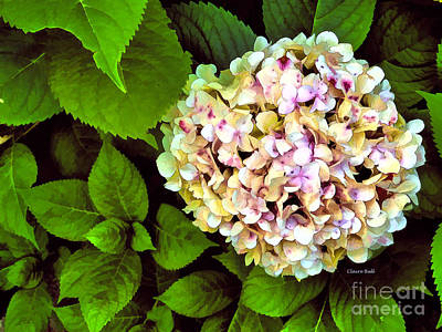 Digital Art - Hydrangea by Claire Bull