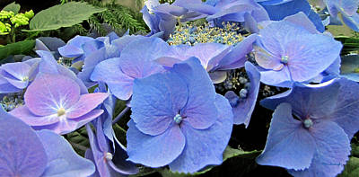 Photograph - Hydrangea Cluster by Duane McCullough