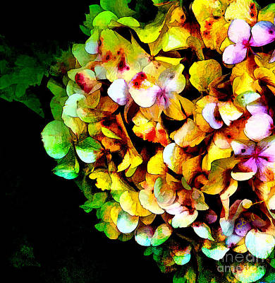 Photograph - Hydrangea Color by Claire Bull