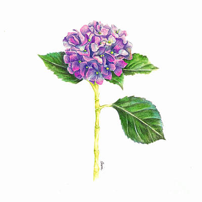 Painting - Hydrangea by Dion Dior
