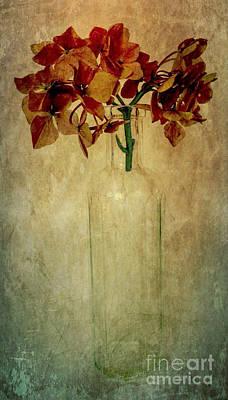 Photograph - Hydrangea by Elena Nosyreva