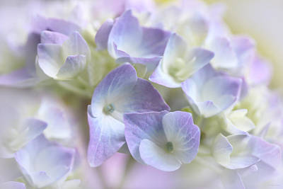 Photograph - Hydrangea Floral Macro by Jennie Marie Schell