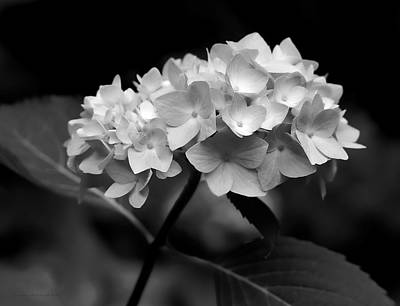 Photograph - Hydrangea Flower Bouquet Black And White by Jennie Marie Schell
