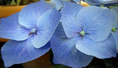 Photograph - Hydrangea Flower Set by Duane McCullough