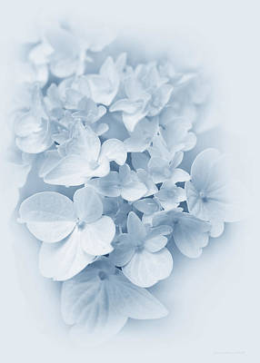 Photograph - Hydrangea Flowers Blue Pastel Delight by Jennie Marie Schell