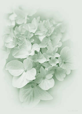 Photograph - Hydrangea Flowers Green Pastel Delight by Jennie Marie Schell