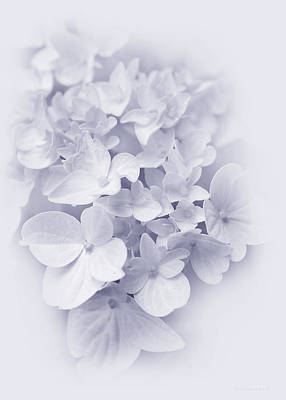 Photograph - Hydrangea Flowers Lavender Delight  by Jennie Marie Schell