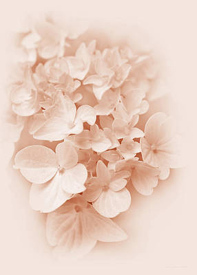 Patriotic Signs - Hydrangea Flowers Peach Pastel Delight by Jennie Marie Schell