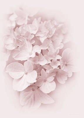 Photograph - Hydrangea Flowers Pink Pastel Delight by Jennie Marie Schell