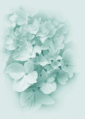 Photograph - Hydrangea Flowers Teal Pastel Delight by Jennie Marie Schell