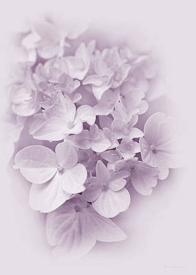 Purple Hydrangeas Photograph - Hydrangea Flowers Violet Pastel Delight by Jennie Marie Schell