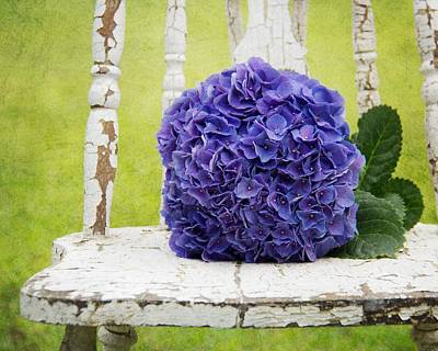 Photograph - Hydrangea I by Mary Hershberger