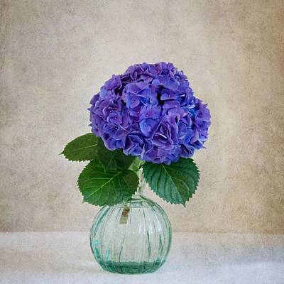 Photograph - Hydrangea IIi by Mary Hershberger
