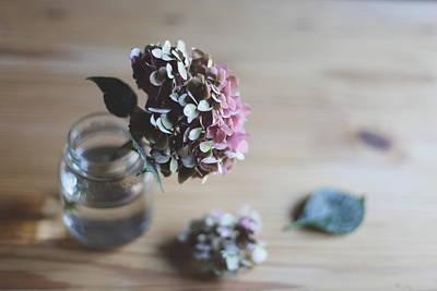 Jar Photograph - Hydrangea In A Jar by Imatge De L'hort De La Lolo