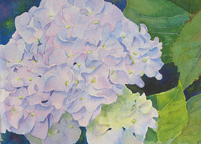 Painting - Hydrangea by Judy Mercer