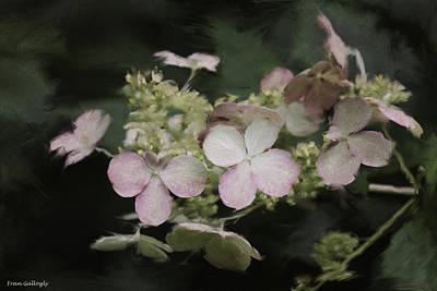 Photograph - Hydrangea Quicksilver by Fran Gallogly