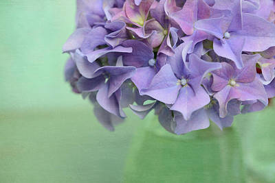 Purple Hydrangeas Photograph - Hydrangea Still Life by Cora Niele