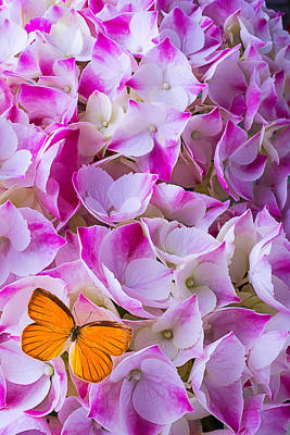 Butterfly Photograph - Hydrangea With Orange Butterfly by Garry Gay