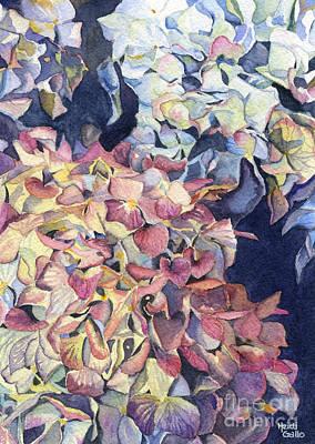 Hydrangea Watercolor Painting - Hydrangeas by Heidi Gallo